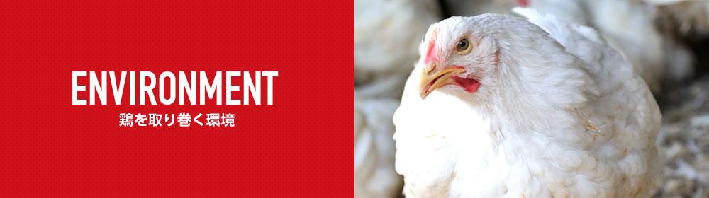 鶏を取り巻く環境
